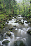 Appalachian Spring Scene Big Creek  Great Smoky Mts  North Carolina
