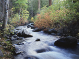 California  Sierra Nevada  Inyo Nf  Lee Vining Creek Through Forest