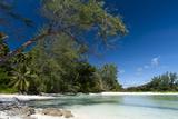 Denis Island  Seychelles
