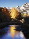 California  Sierra Nevada  Autumn Aspens Reflecting in Bishop Creek