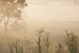 Australia  Victoria  Yarra Valley  Healesville  Field with Fog  Dawn