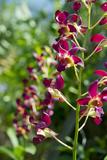 Australia  Northern Territory  Darwin Jennys Orchid Garden