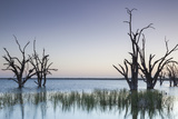 Australia  Murray River Valley  Barmera  Lake Bonney  Petrified Trees