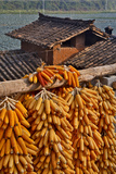 Corn Hanging to Dry in Old Farm House  China Kunming District