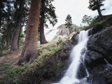 California  Sierra Nevada  Yosemite National Park  Waterfall from the Forest
