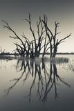 Australia  Murray River Valley  Barmera  Lake Bonney  Petrified Trees