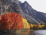 California  Sierra Nevada  Red Color Aspens Along Grant Lake  Inyo Nf