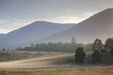 Australia  Victoria  Yarra Valley  Healesville  Field with Fog  Dawn