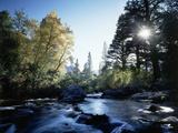 California  Sierra Nevada  Fall Color Trees on a Creek