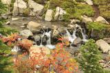 Autumn at Edith Creek Near Paradise Lodge  Mt Rainier National Park  Wa  USA