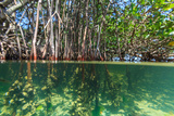 Over and under Shot of Mangrove Roots in Tampa Bay  Florida