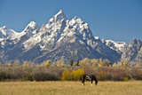 Horse and Grand Tetons  Moose Head Ranch  Grand Teton National Park  Wyoming  USA