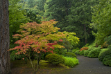 Autumn Color  Portland Japanese Garden  Portland  Oregon  USA