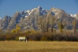 White Horse  Autumn  Grand Tetons  Grand Teton National Park  Wyoming  USA