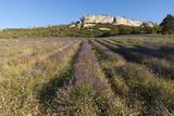 Croagnes  Provence  France