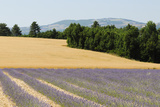Terrassieres  Provence  France