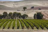 Australia  Clare Valley  Auburn  Vineyard