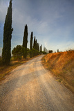 Tuscan Cypress Lined Back Road