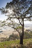 Australia  Victoria  Buninyong  Landscape from Mount Buninyong
