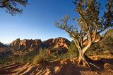 Juniper Tree and View from Schnebly Hill Vista  Sedona  Arizona
