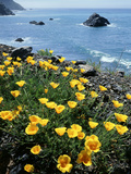 California  Big Sur Coast  Central Coast  California Poppy