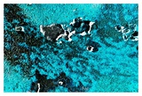 Rust Ocean IV