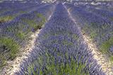Banon  Provence  France