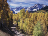 Colorado  Rocky Mountains  Dirt Road  Autumn Aspens in the Backcountry