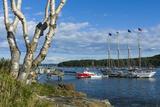 Maine  Mt Desert Island  Bar Harbor  Tall Ship  Frenchman Bay