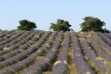 Sault  Provence  France