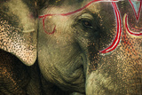 India  Bihar  Patna  Sonepur Mela Cattle Fait  Painted Elephant