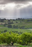 Australia  Fleurieu Peninsula  Mclaren Vale Wine Region  Vineyard View