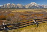 Fall Color  Buck and Rail Fence  Grand Tetons  Grand Teton National Park  Wyoming
