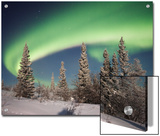 Northern Lights or Aurora Borealis over Boreal Forest  North America