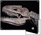 Allosaurus Skeleton Skull  Jaws and Teeth  against a Black Background