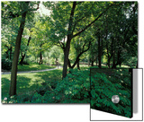 Scenic and Shady Central Park Garden Pathway on a Summers Afternoon  New York