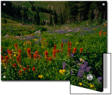 Radiant Summer Blooms Crowd a High Mountain Meadow on the Teton Crest Trail