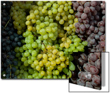Bunches of Grapes of Three Colors Lit by the Sun  Tuscany  Italy