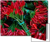 Red Chile Peppers in Bunches at the Rialto Market in Venice  Italy