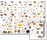 Coral reef species collected within a one cubic foot metal cube