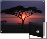 Sunset with Acacia Tree
