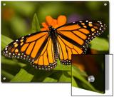 Monarch Butterfly at the Lincoln Children's Zoo  Nebraska