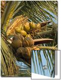 Coconuts Cluster at Los Tules Resort in Puerto Vallarta  Mexico