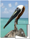 Personable Pelican Portrait Along Florida's Coastline