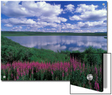 Fireweed  Lake and Clouds Reflecting in a Lake  Alaska