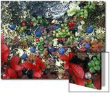 Blueberry Plants and Mosses  Alaska