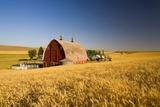 Sunset Barn and Wheat Field; Steptoe Butt  Washington  USA
