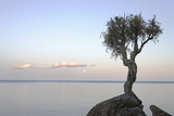 A Lone Tree on Lake Superior; Grand Portage  Minnesota  United States of America
