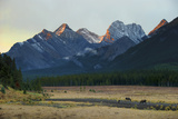Moose Grazing at Sunset with Mountains in the Background; Alberta Canada
