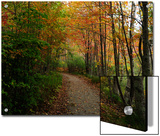 Autumn Foliage in Acadia National Park